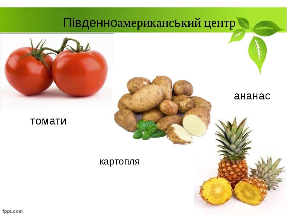 картопля Південноамериканський центр томати ананас