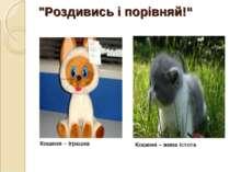 """""""Роздивись і порівняй!"""" Кошеня – жива істота Кошеня – іграшка"""
