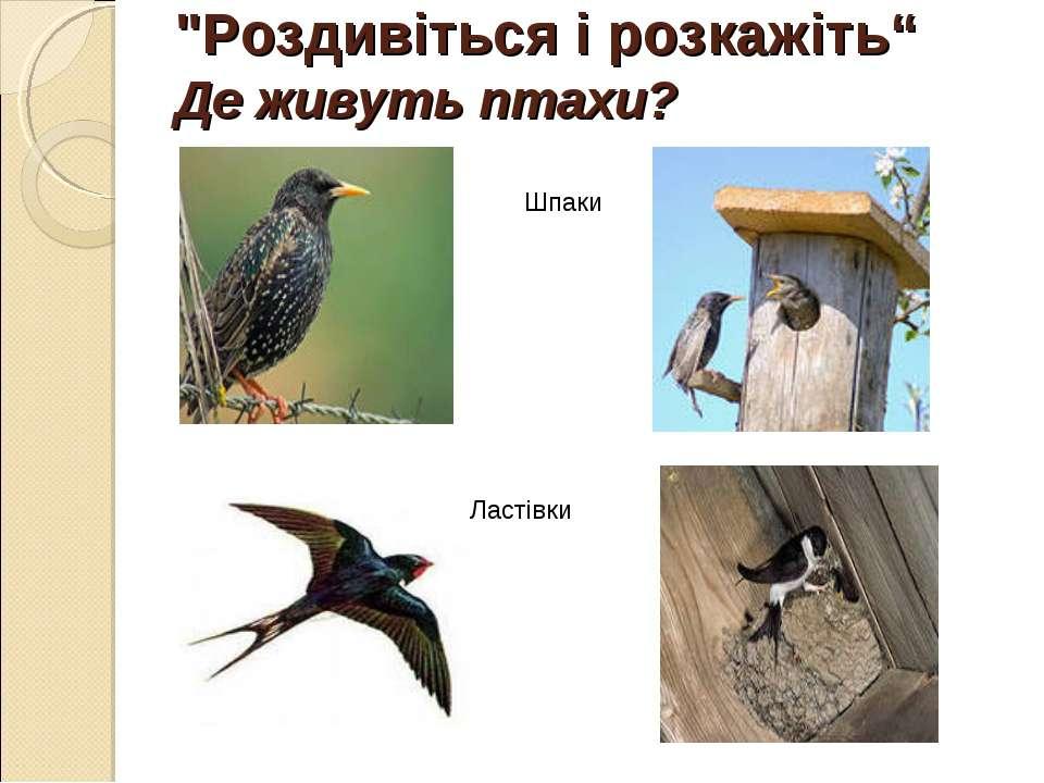 """""""Роздивіться і розкажіть"""" Де живуть птахи? Шпаки Ластівки"""