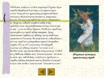 Збирання цілющих купальських трав. Найбільш стійкими на всій території Україн...