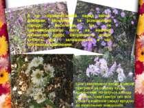 А це справжнісінькій парад квітів: ромашки, гвоздички та різноколірні городні...