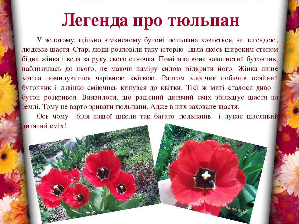 Легенда про тюльпан У золотому, щільно зімкненому бутоні тюльпана ховається, ...
