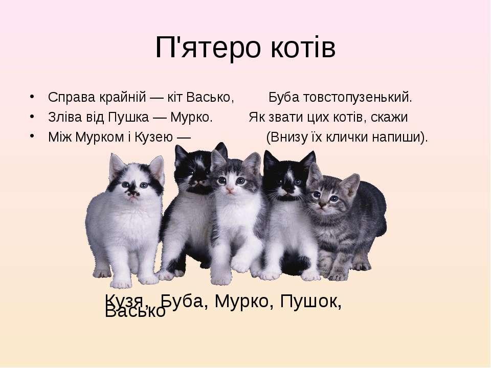 П'ятеро котів Справа крайній — кіт Васько, Буба товстопузенький. Зліва від Пу...