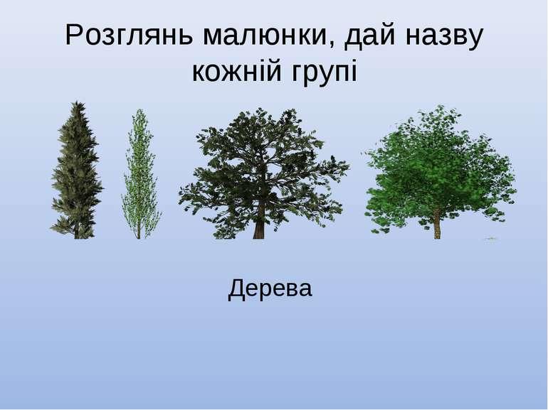 Розглянь малюнки, дай назву кожній групі Дерева