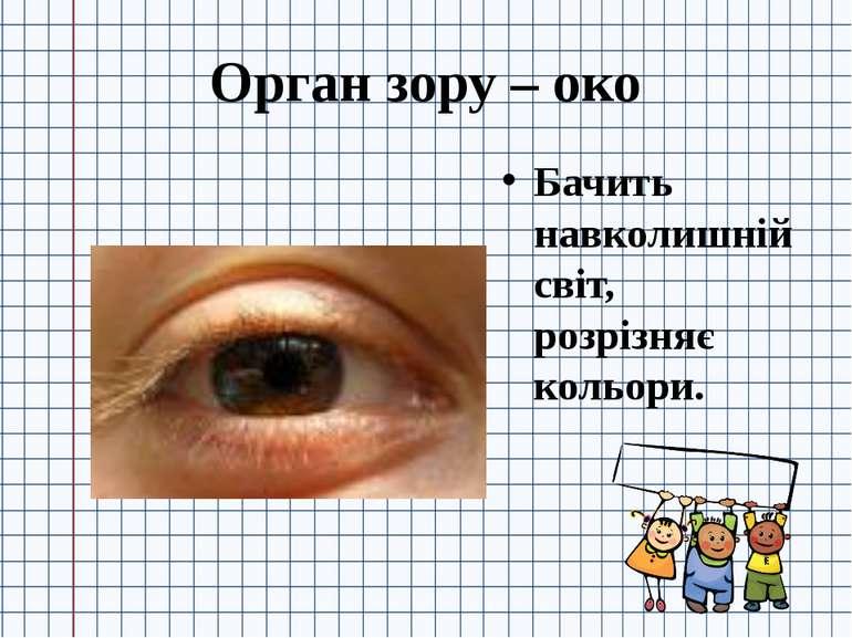 Орган зору – око Бачить навколишній світ, розрізняє кольори.