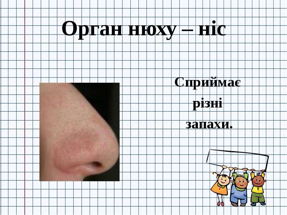 Орган нюху – ніс Сприймає різні запахи.