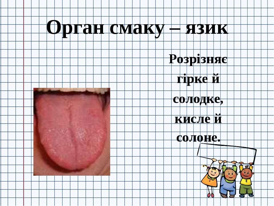 Орган смаку – язик Розрізняє гірке й солодке, кисле й солоне.