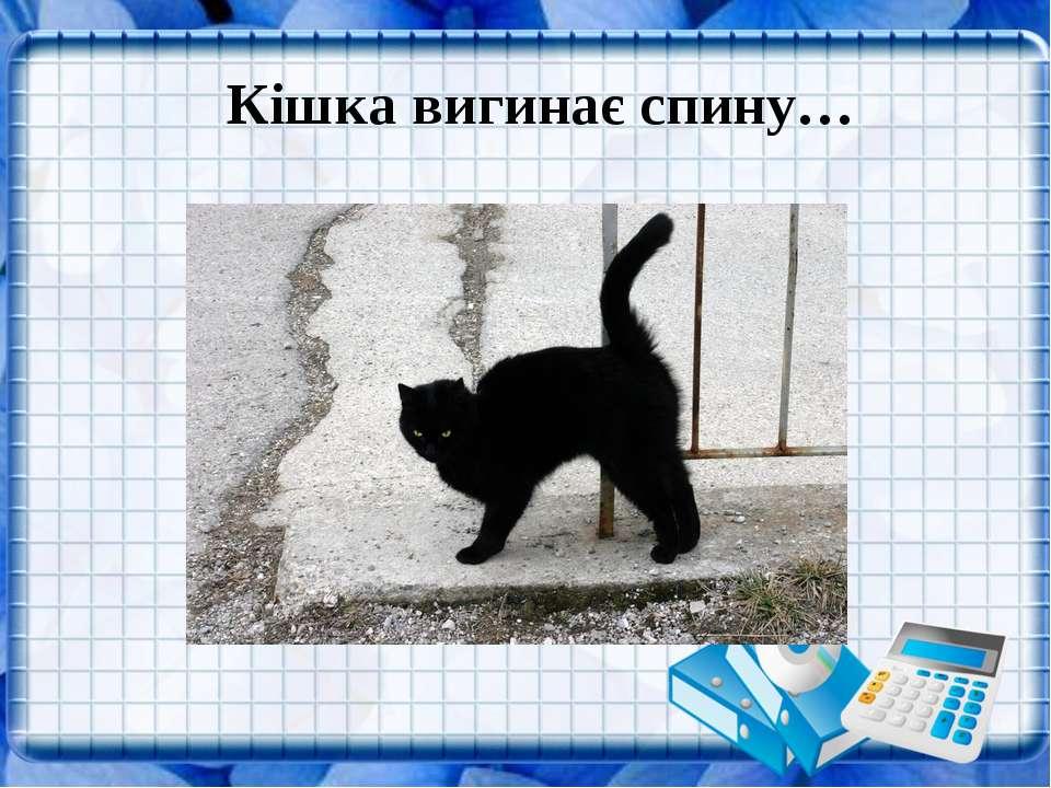 Кішка вигинає спину…