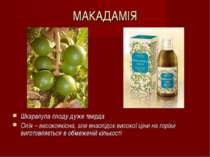 МАКАДАМІЯ Шкаралупа плоду дуже тверда Олія – високоякісна, але внаслідок висо...