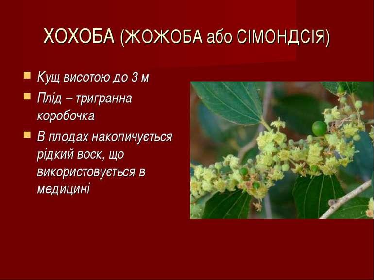 ХОХОБА (ЖОЖОБА або СІМОНДСІЯ) Кущ висотою до 3 м Плід – тригранна коробочка В...