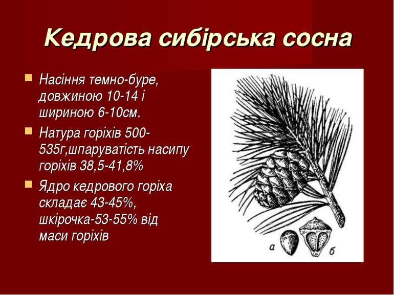 Кедрова сибірська сосна Насіння темно-буре, довжиною 10-14 і шириною 6-10см. ...