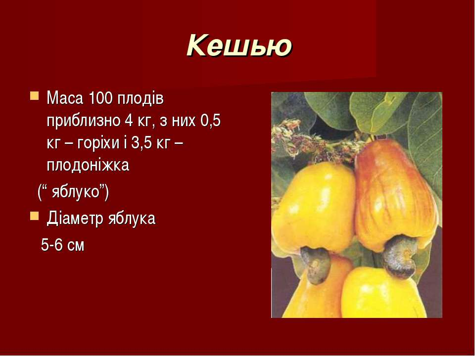 Кешью Маса 100 плодів приблизно 4 кг, з них 0,5 кг – горіхи і 3,5 кг – плодон...