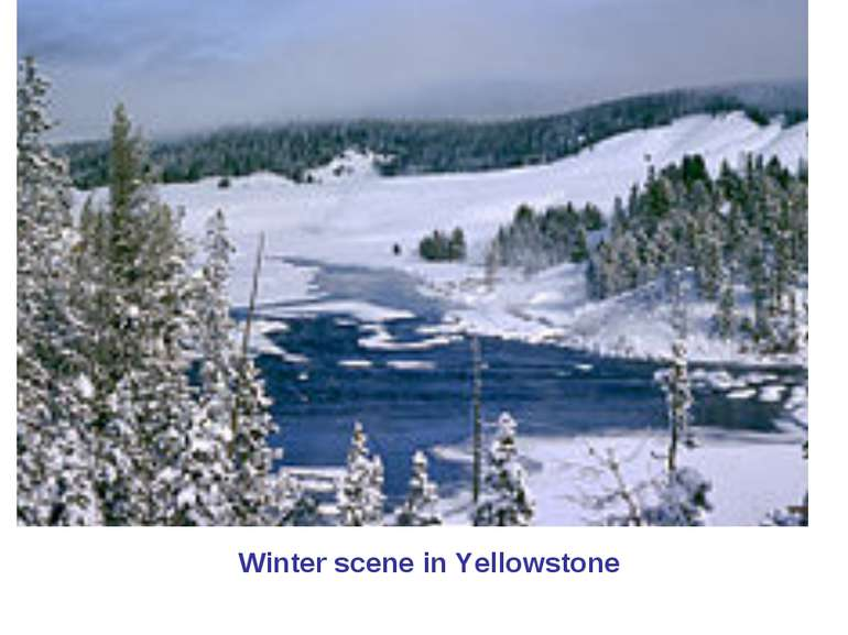Winter scene in Yellowstone