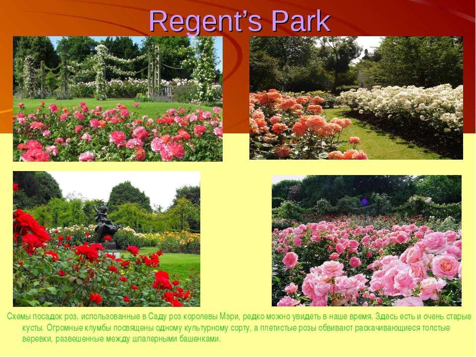 Regent's Park Схемы посадок роз, использованные в Саду роз королевы Мэри, ред...