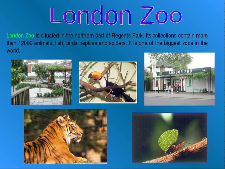 London Zoo is situated in the northern part of Regents Park. Its collections ...