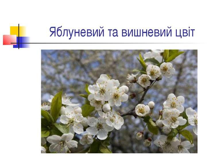 Яблуневий та вишневий цвіт