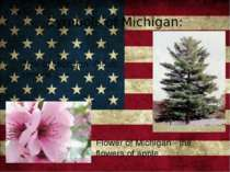 Symbols of Michigan: Tree of Michigan -Pinus strobus Flower of Michigan - the...