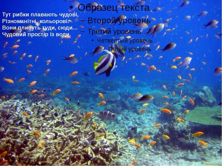 Тут рибки плавають чудові, Різноманітні, кольорові. Вони пливуть туди, сюди… ...