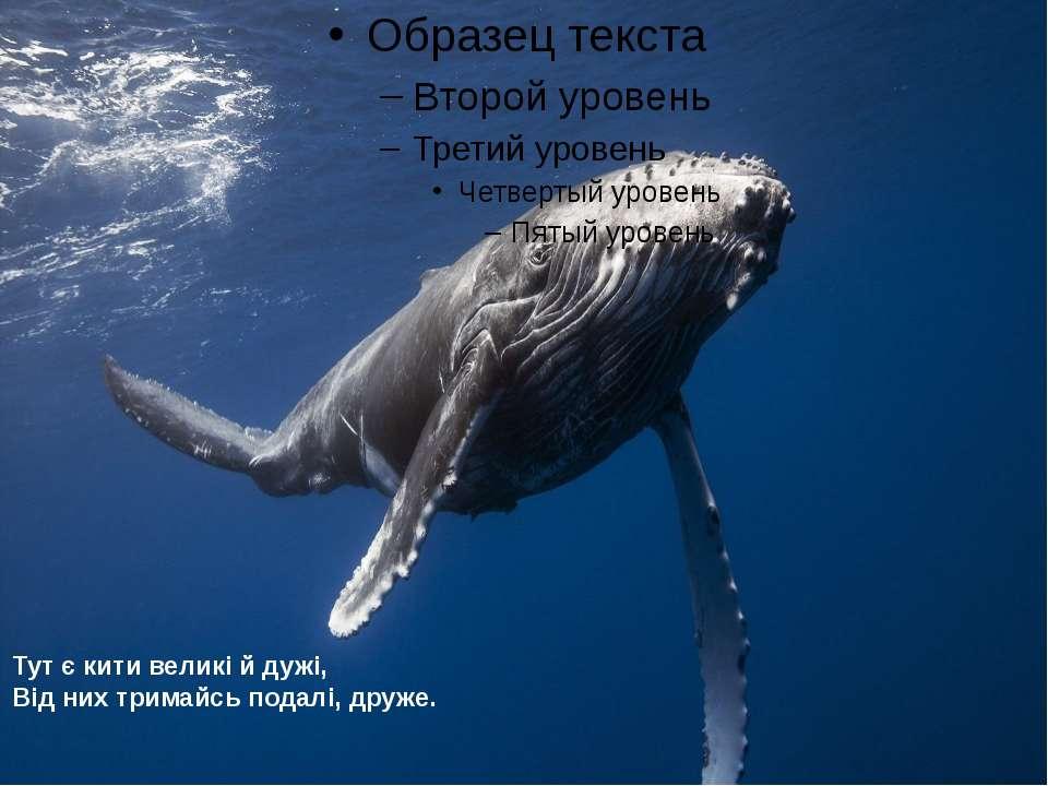 Тут є кити великі й дужі, Від них тримайсь подалі, друже.