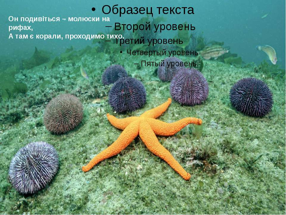 Он подивіться – молюски на рифах, А там є корали, проходимо тихо.