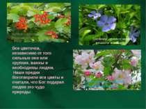 Цветки вишни и яблони – материнская любовь Барвинок – символ жизни, вечности ...