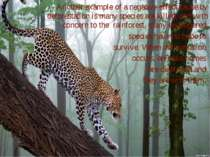 Another example of a negative effect cause by deforestation is many species a...