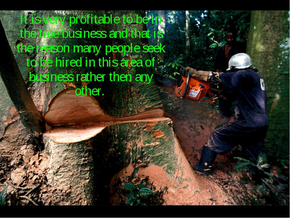 It is very profitable to be in the tree business and that is the reason many ...