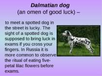 Dalmatian dog (an omen of good luck) – to meet a spotted dog in the street is...