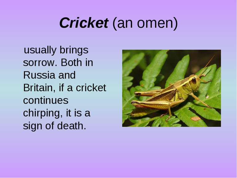 Cricket (an omen) usually brings sorrow. Both in Russia and Britain, if a cri...
