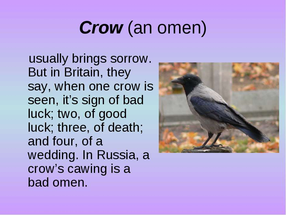 Crow (an omen) usually brings sorrow. But in Britain, they say, when one crow...