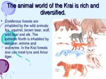 The animal world of the Krai is rich and diversified. Coniferous forests are ...