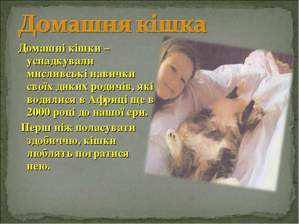 Домашні кішки – успадкували мисливські навички своїх диких родичів, які водил...