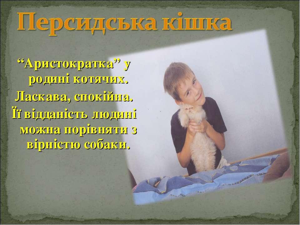 """""""Аристократка"""" у родині котячих. Ласкава, спокійна. Її відданість людині можн..."""