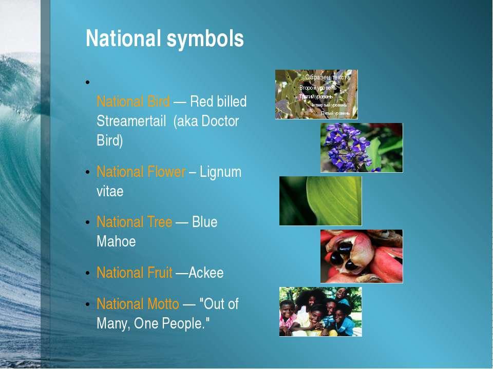 National symbols National Bird —Red billed Streamertail (aka Doctor Bird) N...