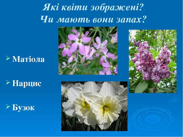 Які квіти зображені? Чи мають вони запах? Матіола Нарцис Бузок