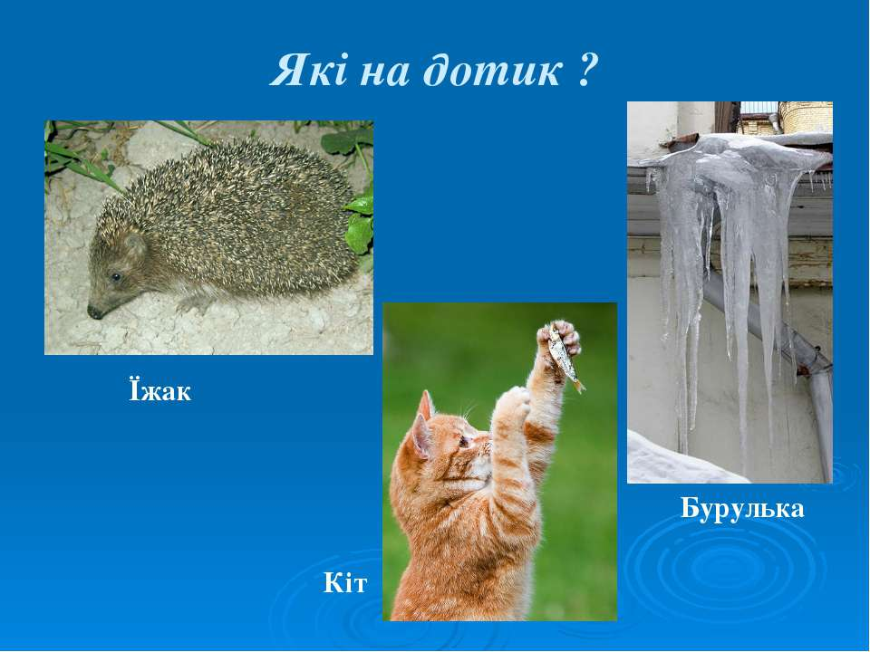 Які на дотик ? Їжак Бурулька Кіт