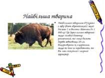 Найбільша тварина Найбільшою твариною в Україні є зубр (бізон європейський), ...