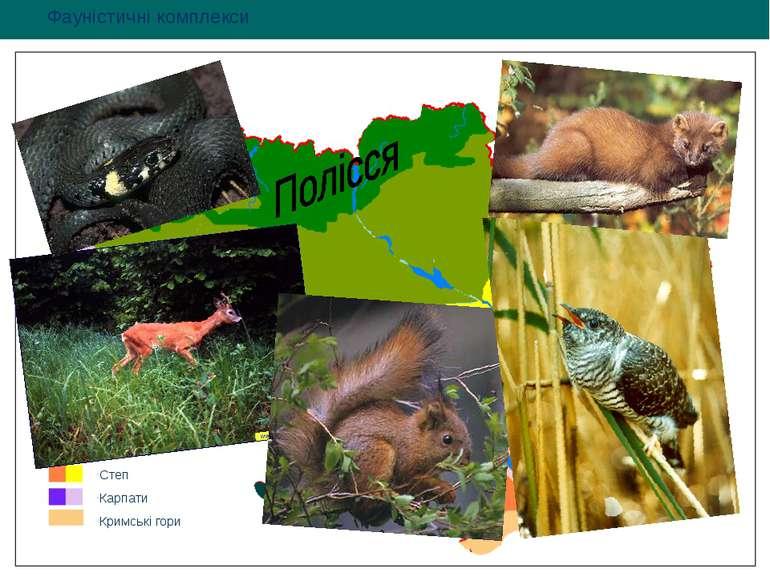 Фауністичні комплекси Полісся Лісостеп Степ Карпати Кримські гори