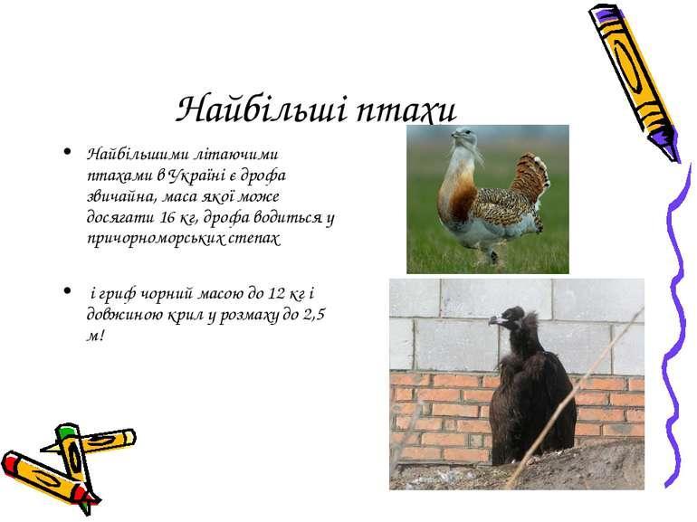 Найбільші птахи Найбільшими літаючими птахами в Україні є дрофа звичайна, мас...