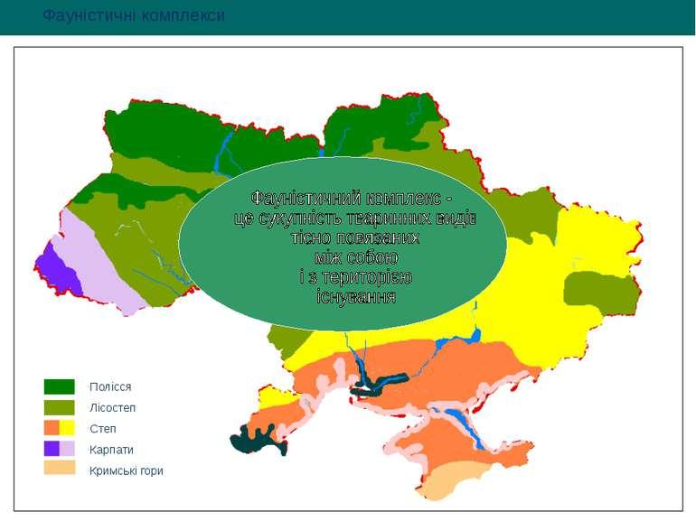 Полісся Лісостеп Степ Карпати Кримські гори Фауністичні комплекси