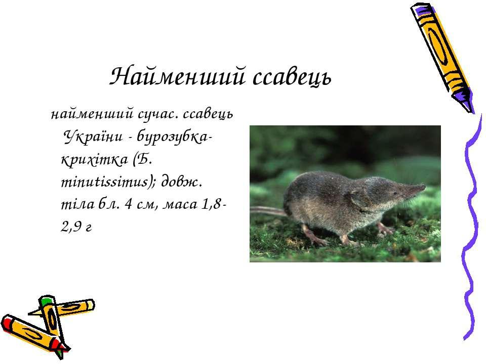 Найменший ссавець найменший сучас. ссавець України - бурозубка-крихітка (Б. m...