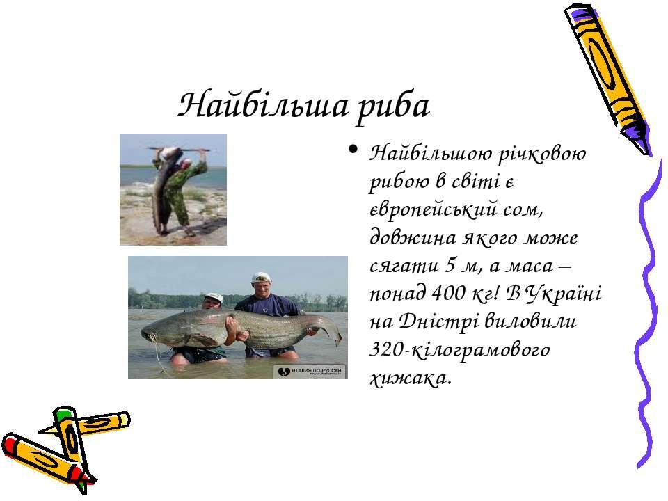 Найбільша риба Найбільшою річковою рибою в світі є європейський сом, довжина ...