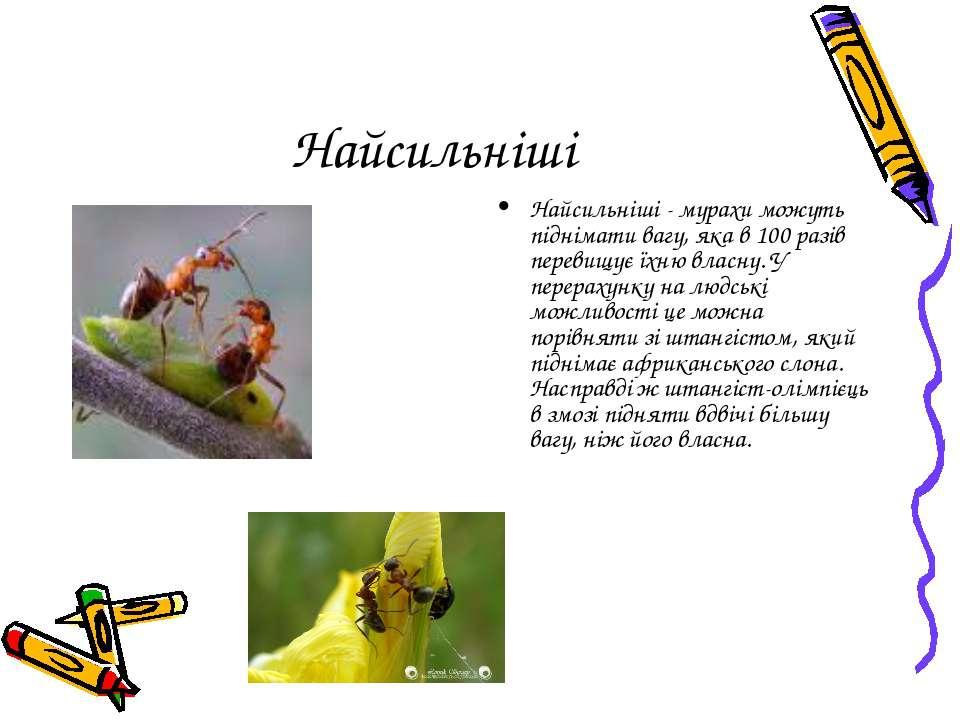 Найсильніші Найсильніші - мурахи можуть піднімати вагу, яка в 100 разів перев...