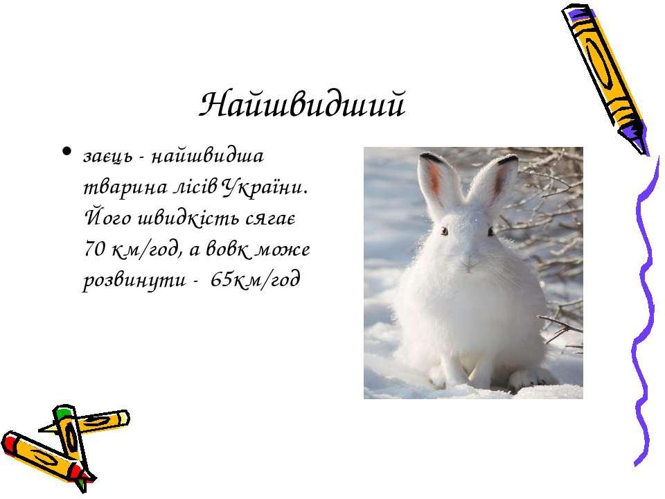 Найшвидший заєць - найшвидша тварина лісів України. Його швидкість сягає 70 к...