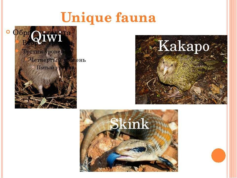 Unique fauna Qiwi Kakapo Skink