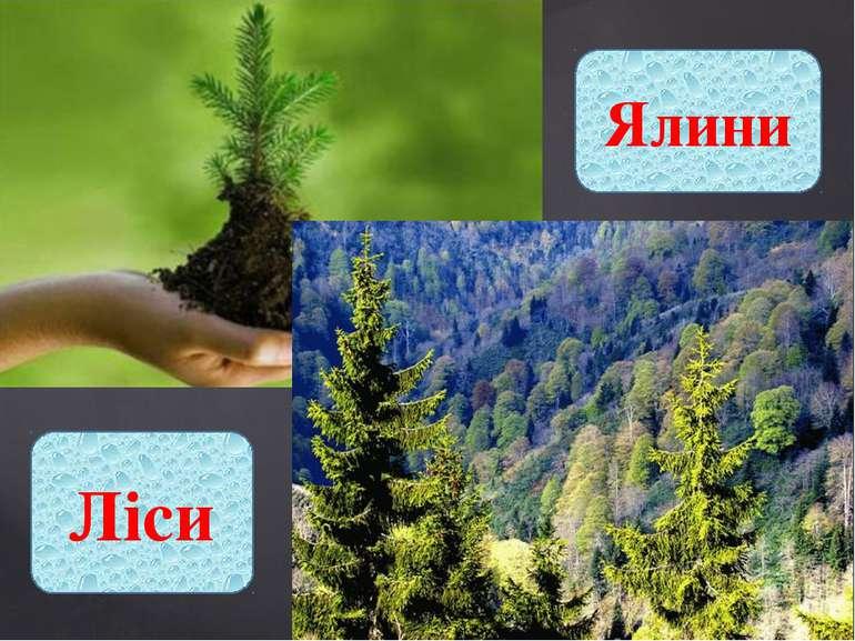 Ялини Ліси