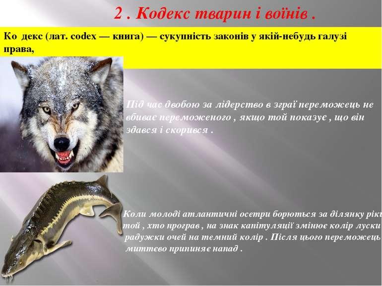 2 . Кодекс тварин і воїнів . Ко декс (лат. codex — книга) — сукупність законі...