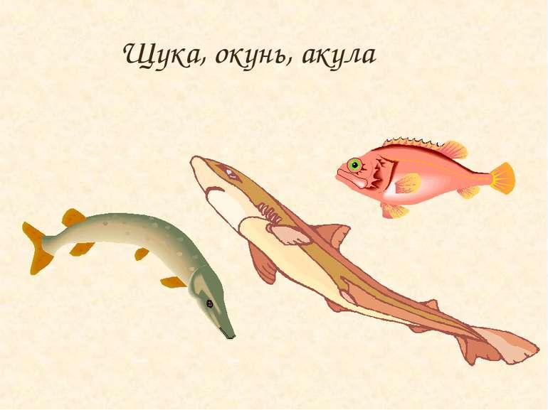 Щука, окунь, акула