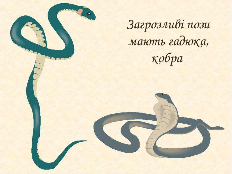 Загрозливі пози мають гадюка, кобра
