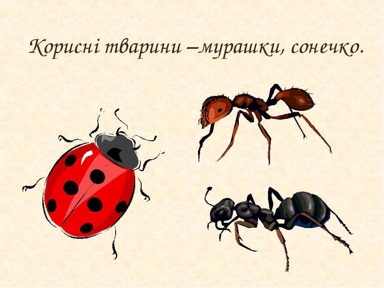 Корисні тварини –мурашки, сонечко.